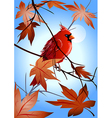 Northern cardinal on the maple branch vector image
