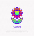 bright flower thin line icon vector image
