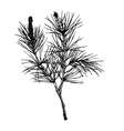 decorative silhouette hand drawn pine branch vector image vector image