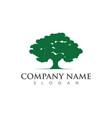 oak tree leaf logo template vector image