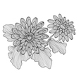 decorative gerbera vector image vector image