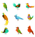 exotic birds from jungle rain forest collection of vector image vector image