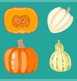 fresh orange pumpkin decorative seasonal ripe food vector image vector image