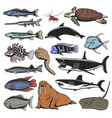 sea animals isolated fish and turtle vector image vector image