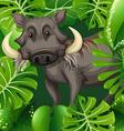 Wild pig in the bush