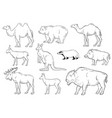 collection wild animals on white background vector image vector image
