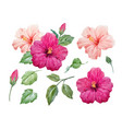 watercolor tropical hibiscus flower vector image