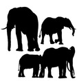 Elephants Silhouettes vector image vector image