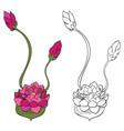 purple lotus flower vector image vector image