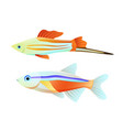 neon tetra and swordtail fish isolated on white vector image vector image