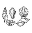 sea shell set sketch engraving vector image vector image