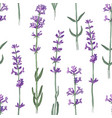 seamless pattern with hand drawn lavender flowers vector image