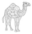 adult coloring bookpage a cute camel image for vector image