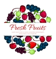 Fresh forest and garden fruits berries poster vector image vector image