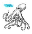 octopus ink sketch vector image vector image