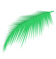 palm leaf object vector image vector image