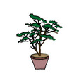 potted plant tree natural botanical vector image vector image