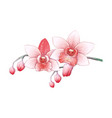 set phalaenopsis orchid pink red flowers on vector image vector image