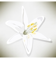 white lily on a gray background vector image