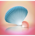 big and small seashells vector image vector image