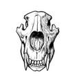hand made bear skull vector image vector image