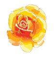 orange rose vector image