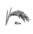 rice plant sketch vector image