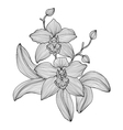 decorative orchid vector image vector image