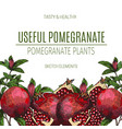 design of hand drawn pomegranate vintage vector image vector image
