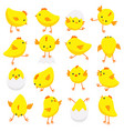 eastern chicks in various poses isolated on white vector image