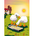 geese in a meadow eating from a manger vector image