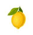lemon with green leaves natural vector image vector image