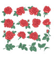 collection red roses rose flowers leaves and vector image