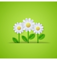 Summer floral background with daisy flowers vector image vector image