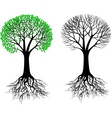 tree and root vector image vector image