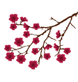 blossom red vector image vector image