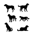 Breed of a dog St Bernard silhouettes vector image vector image