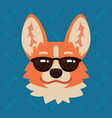 corgi dog emotional head in sunglasses vector image vector image