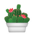 Isolated cartoon decorative home plant cactus in