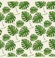 monstera plant seamless pattern on a white vector image vector image