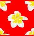 seamless of plumeria white frangipini vector image