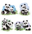 cartoon set of cute panda bear characters vector image vector image