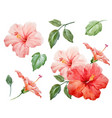 watercolor tropical hibiscus flower vector image vector image