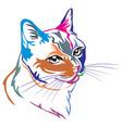 colorful decorative portrait of thai cat vector image vector image