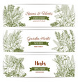 herbs spices and leaf vegetables sketch banner vector image vector image