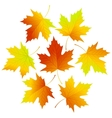 Set fall leaves for your design vector image vector image