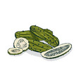 elegant detailed drawing of whole and cut pickles vector image