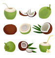 flat set of fresh coconuts exotic cocktail vector image