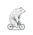 polar bear is riding a bicycle vector image vector image