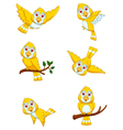 set of yellow bird cartoon posing vector image vector image